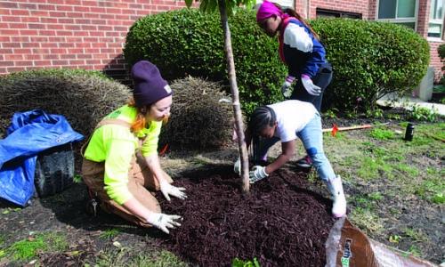 volunteer's planting trees